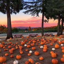 Best Pumpkin Patch Near Roseville Ca by Apple Hill Home Facebook