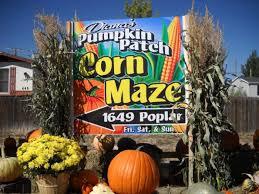 Atlanta Pumpkin Patch Corn Maze by 10 Great Pumpkin Patches In Colorado