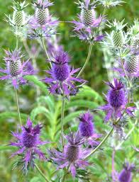August 2010 | Boerne Chapter Free Images Blossom Lawn Flower Bloom Backyard Botany Go Native Or Wild News Creating A Wildflower Meadow From Part 1 Youtube Wildflower Garden Update Life In Pearls And Sports Bras Budapest Domestic Integrity Field Of Wildflowers She Shed Decorating Ideas How To Decorate Your Backyard Pics Best 25 Meadow Garden Ideas On Pinterest Rockoakdeer Neighborhood For National Week About Texas A Whole Wildflowers For Tears The Duster Today Fields Flowers Design With Apartment Balcony