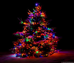 Blinking Xmas Tree Lights by Holiday Lights Theme And Variation Sigma Blog