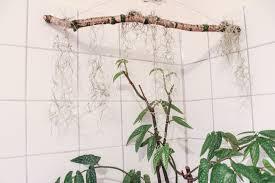 ast mit tillandsien diy dragonflys home garden