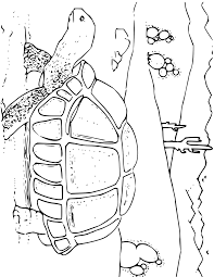 Clever Design Desert Animal Coloring Pages Unique Animals 76 In Free Book With