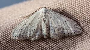 How To Prevent Moths In Closets Closet Clothes