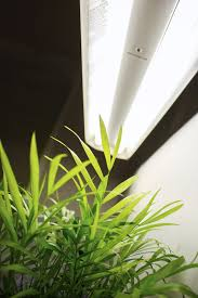 Fluorescent Grow Lights – Learn About Different Types Grow Lights