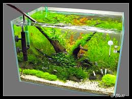 31 best nano planted tanks images on nano aquarium