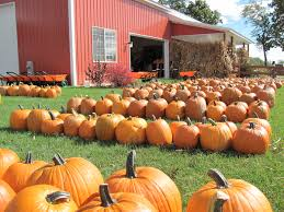 Pumpkin Patch Homer Glen Il by Pumpkin Farms In Chicago Area A Fall Family Guide Chicago Tribune