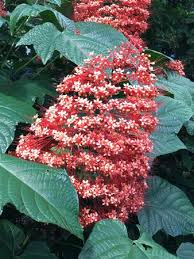 Nani Mau Gardens Hilo Top Tips Before You Go with s