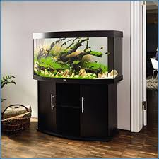 juwel aquarium vision 260 admin author at aqua home