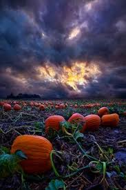 West Produce Pumpkin Patch Fayetteville Nc by The Pumpkin House Kenova West Virginia Virginia Photo S And House
