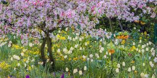 33 best bulbs to plant in fall for flowers to plant in