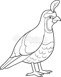 Coloring Book Quail Vector Art