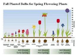 planning and selecting fall planted bulbs