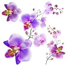 sanders sanders wandtattoo blumen rosa und lila