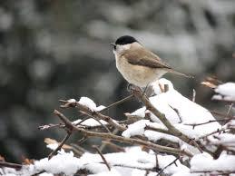 100 Small And Elegant Birds Wildlifegardenings Blog