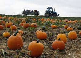 Denver Pumpkin Patch by Golden Hammer Taxpayers Fund Pumpkin Patches Hay Rides Fall