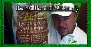 How To Kill Fleas And Ticks All Naturally! - YouTube How To Kill Fleas And Ticks All Naturally Youtube Keep Away From Your Pet Fixcom Get Rid Of Get Amazoncom Dr Greenpet Natural Flea Tick Prevention Tkicide The Art Getting Ticks In Lawns Teresting Rid Bugs Back Yard Ways Avoid Or Deer Best 25 Mosquito Control Ideas On Pinterest Homemade Mosquito Dogs Fast Way Mole Crickets Treatment Control Guide