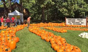 Hillcrest Farms Pumpkin Patch by Agents Answer Where U0027s The Best Place For Pumpkin Picking In Wnc
