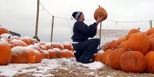 Pumpkin Patch Fort Collins by A Noco October 5 Things To Do This Fall