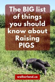 396 Best Pigs Images On Pinterest | Livestock, Pigs And Farm Animals Which Pig Find Your Next Thing Modern Farmer Pigs Pigs And More Pigs Backyard Chickens Raising Feeder Concrete Or Pasture Farm Fresh For Life Figueroa Breeding Gguinto Bulacan Youtube For The First Time Page 2 Pastureraised Pork Grows In Popularity Missippi A Balancing Act Being A Mom Wife Backyard Hogswine Cambodian Case Study Inrgrated Fish Farming The Site How To House Fence Price Of Illinois Poisoned Creeks Yet Limited 223 Best Images On Pinterest Farms