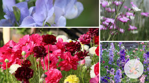 cut flower garden planning hardy annuals and planting fall