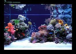large aquarium rocks for sale best 25 reef aquascaping ideas on reef aquarium