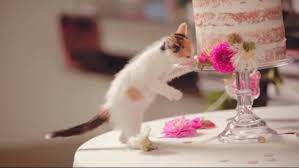 cat wedding dress ultimate cat wedding starring cats and some orphan