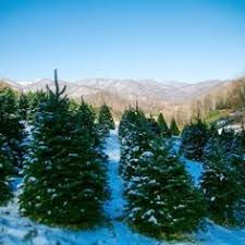 Pinecrest Christmas Tree Farm by Christmas Tree Farm Hh Finding The Perfect Christmas Tree