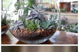 Best Plant For Your Bathroom by The 6 Best Plants For Your Bathroom Gardening Viral