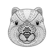 Wombat Face Adult Coloring Page Thumbnail