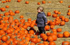 Sand Springs Pumpkin Patch by Pumpkin Patches In And Around Denver 2017 The Denver Ear