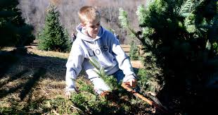 Christmas Tree Saplings For Sale by Christmas Tree Farm About More Than A Tree
