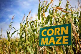 Denver Pumpkin Patch Corn Maze by Best Corn Mazes U Pick Lane
