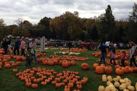 Best Pumpkin Apple Picking Long Island Ny by Where To Go Pumpkin Picking Near Nyc With Kids