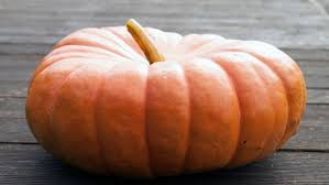 Largest Pumpkin Ever by How Do You Ripen Pumpkins Reference Com