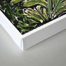 100 Flannel Flower Glass Actinotus Helianthi Canvas Print