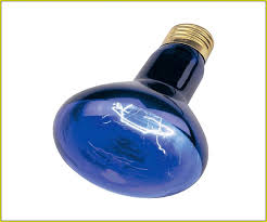 light bulb top recommended blue light bulbs lowes no blue light