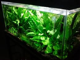 It's All About Aquascaping!: CURRENT LOW TECH TANK 329 Best Aquascape Images On Pinterest Aquarium Ideas Floratic Visiting Paradise At Shah Alam Planted Aquarium Aquascape Things Aquariums Aquascaping Malaysia Diy Pertama Kali Aquascaping October 2010 Of The Month Ikebana Aquascaping World Sumida Aquarium Reloaded Fish Tanks And Designs Awesome A Moss Experiment Its All About Current Low Tech Tank Cuisine Wonderful Small Cubical Styles Planted The Surreal Submarine Amuse