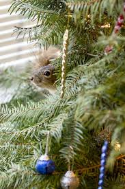 Best Live Christmas Trees For Allergies by Christmas Tree Fails Mistakes For Christmas Trees