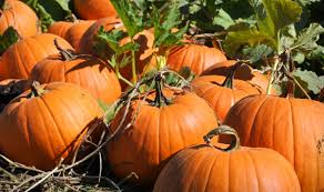 Free Pumpkin Patch Charleston Sc by Fun Fall Festivities For The Whole Family
