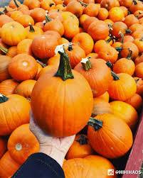 Lehner Pumpkin Farm by Great Pumpkin Farm Greatpumpkinwny Twitter