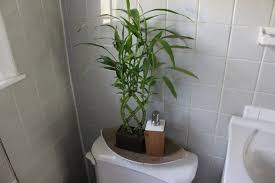 Plants In Bathroom Images by Plants In Bathroom Full Size Of Bathroom Wallpaper High
