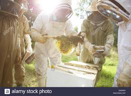 Kenyans Learn The Method Of Top-bar Beekeeping. Tree Of Life Stock ... Bkeeping Equipment Decisions Kenyan Top Bar Hive Part 1 How To Transfer Brood Comb From Langstroth Frames A New Top Bar Che Guebee Apiary Heaven Building Our Hives Ipdence Homestead Musings On Hives For Economical Bee Keeping Make Youtube Culvating Change Agriculture And Food Security Blog Topbar Beehive Making Sustainable Life Getting Started In Your First Year As Management Pdf For Sale Boardman Feeder Talking With Bees