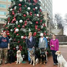 Are Christmas Trees Poisonous To Dogs by Dog University Home Facebook