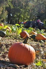 Pumpkin Patch Fayetteville Arkansas by 42 Best Romantic Getaways In Arkansas Images On Pinterest Family