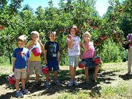 Pumpkin Farms In South Georgia by Picking Your Own Apples In Ellijay Ga U Pick Orchard Red Apple