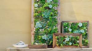 First Class How To Make A Living Wall Together With Vertical Succulent Gardens Sunset Frames Pallet Succulents Frame