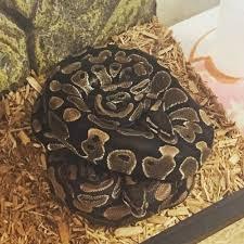 Ball Python Bedding by The Serpentarium 35 Photos U0026 62 Reviews Pet Stores 9160 E
