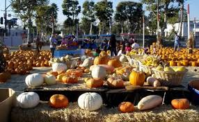 Monrovia Pumpkin Patch by Monrovia Pumpkin Patch Hours In California