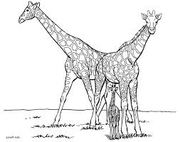 Adult Top Printable Giraffe Coloring Pages Forfree Pictures
