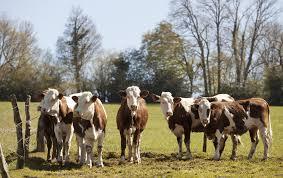 chambre d agriculture franche comté favoriser le développement d une agriculture d excellence et de